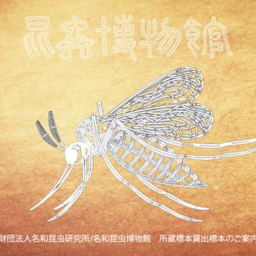 名和昆虫博物館所蔵展示物貸出